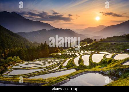 Japanese rice terraces at sunset. Maruyama-senmaida, Kumano, Japan. - Stock Photo