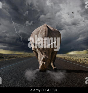 Large rhino ready to charge - Stock Photo