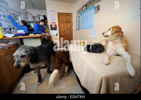 The Many Tears Animal Rescue centre near Llanelli, S. Wales UK - dogs in the reception area. - Stock Photo