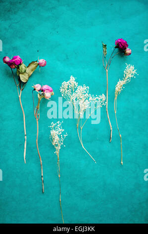 Dried flowers on turquoise surface, - Stock Photo