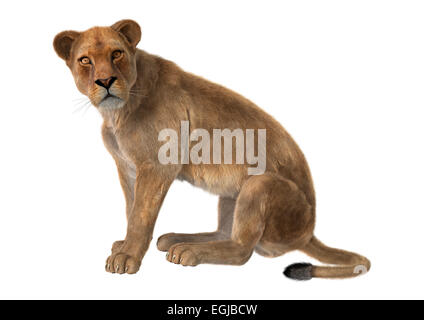 3D digital render of a sitting female lion isolated on white background - Stock Photo