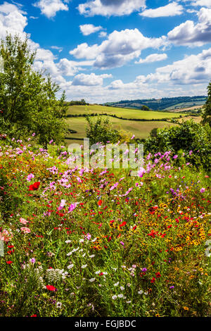 Summer wildflowers with rolling English countryside beyond. - Stock Photo