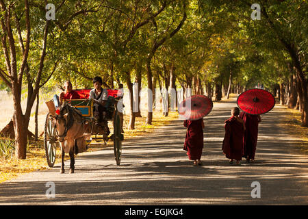 Young buddhist monks and a bullock cart omn a road in Bagan, Myanmar, ( Burma ), Asia - Stock Photo