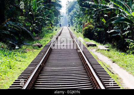 Railway tracks in jungle - Stock Photo