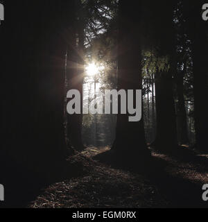 Winter sun shines through trees - Stock Photo