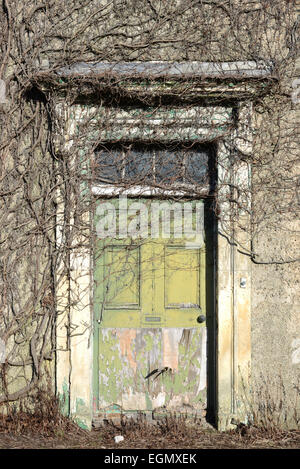 vegetation and ivy growing over doorway in empty house near leeds yorkshire uk - Stock Photo