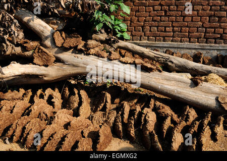 Cow dung cakes used as fuel drying in the sun Indian tribal village  Madhya Pradesh India - Stock Photo