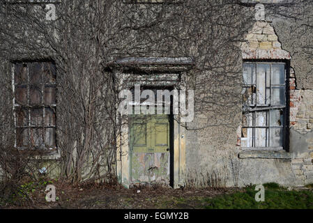 vegetation and ivy growing over empty hall near leeds yorkshire uk - Stock Photo