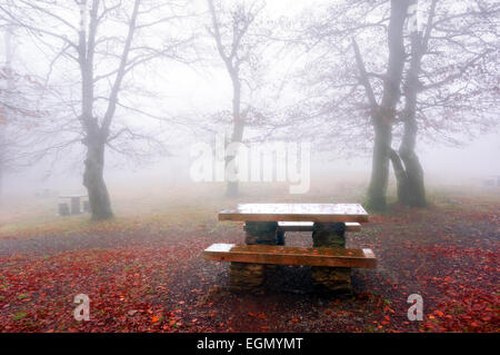 shiny picnic table in foggy forest - Stock Photo