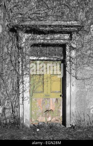 vegetation and ivy growing over doorway in empty house near leeds yorkshire uk - Stock Photo