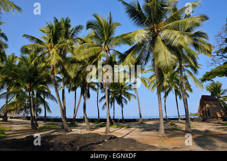 Palm trees - Pu'uhonua O Honaunau National Historical Park, Big Island, Hawaii, USA - Stock Photo