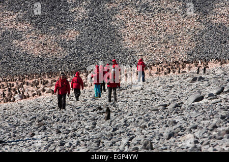 Antarctica, Paulet Island, Antarctic cruise ship passengers visiting Adelie penguin colony - Stock Photo