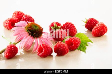 Raspberry, Rubus idaeus cultivar. Several berries arranges with a single Echinacea purpurea flower on white marble. - Stock Photo
