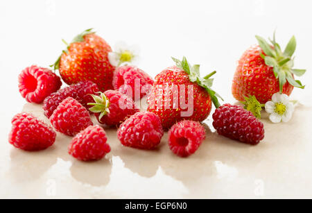 Raspberry, Rubus idaeus cultivar and Strawberry, Fragaria cultivar. Several berries with calyxes and strawberry - Stock Photo