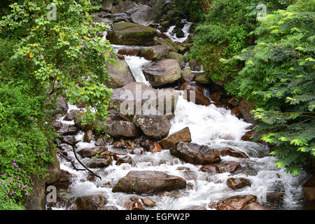 Beautiful Nature Water Stream flowing down the Western ghats forest Valley at Munnar Kerala India - Stock Photo