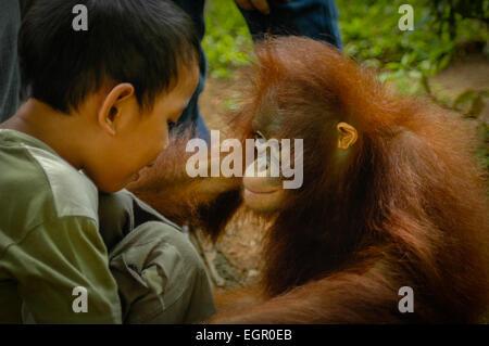 A boy talks to a captive juvenile of Sumatran orangutan in Ancol Recreational Park, Jakarta, Indonesia. - Stock Photo