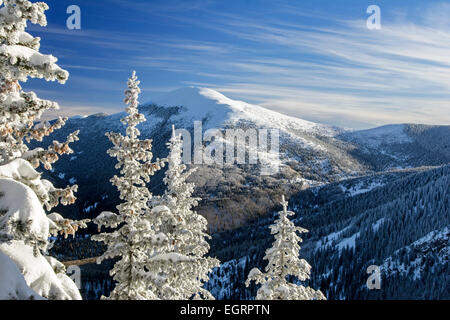 Snow covered trees and Santa Fe Baldy (12,622 ft.) from Ravens Ridge Trail, Santa Fe National Forest, New Mexico - Stock Photo
