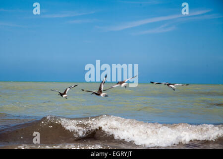 going fishing, birds fishing and playing in the waves of the ocean - Stock Photo