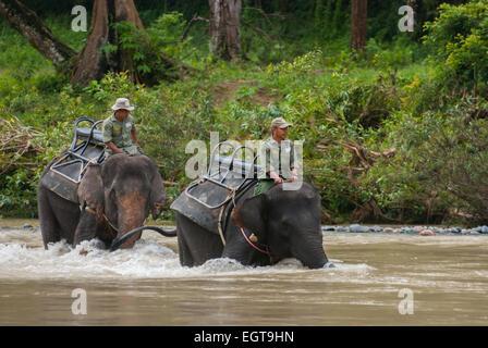 Elephant march in Gunung Leuser National Park, Sumatra, Indonesia. - Stock Photo