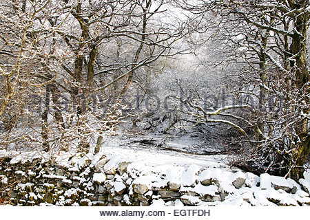 Holwick, Middleton-in-Teesdale, Co Durham, UK. 2nd March 2015. Weather: The snow clings to the trees in Park End - Stock Photo