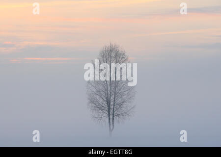 Lonely tree standing at the foggy field in winter. Europe - Stock Photo