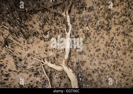 Mangrove community, swamp near Hururu Falls on the estuary of the Haruru river near Paihia and Waitangi, New Zealand. - Stock Photo