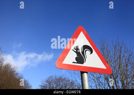 A signpost warns of the presence of squirrels, in this case the endangered red variety - Stock Photo