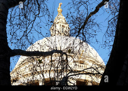 A close-up view of the dome of St Paul's cathedral framed by a tree. - Stock Photo