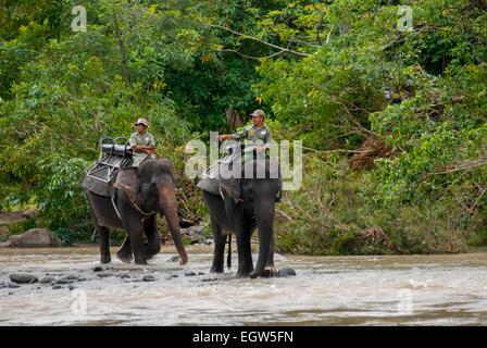 Elephant patrol in Gunung Leuser National Park, Sumatra. - Stock Photo