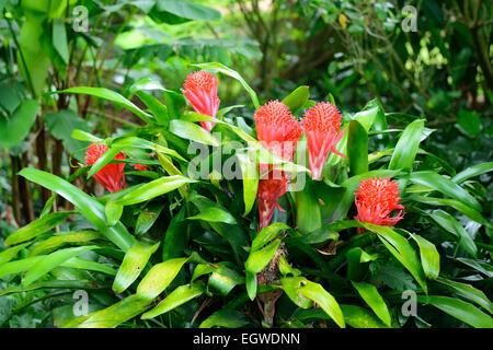 Allerton national tropical botanical garden within lawa 39 i - National tropical botanical garden kauai ...