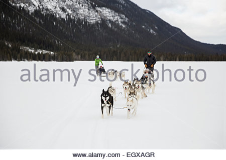 Dogsleds in snowy field - Stock Photo