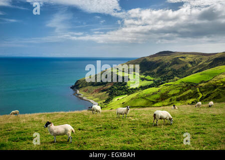 View from Torr Head with sheep grazing. Antrim Coast, Northern Ireland - Stock Photo