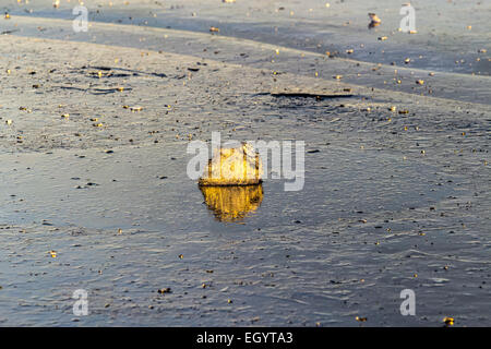 Piece of ice in the surface of the lake reflecting the orange sun at sunset - Stock Photo