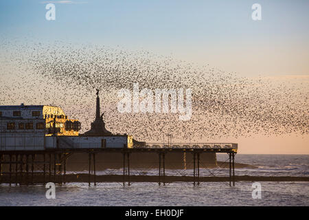 Aberystwyth, Wales, UK. 4 March 2015. Weather. At the end of a sunny spring-like day starlings gather over the pier - Stock Photo