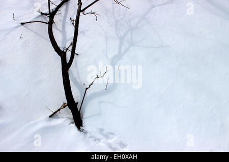 Detail of a fallen tree on white snow after a snowstorm during a heavy winter in Canada - Stock Photo