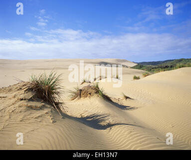 Giant Te Paki Sand Dunes, Te Paki, Cape Reinga, Northland Region, North Island, New Zealand - Stock Photo