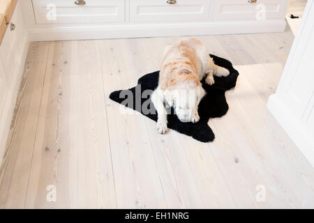 High angle view of dog relaxing on rug in kitchen - Stock Photo