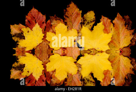 A collage of autumn leaves digitally mirrored - Stock Photo