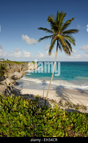 Barbados beach, turquoise sea, blue sky, fluffy white clouds.  Lone coconut palm tree dominating scene.  Tree shadows - Stock Photo