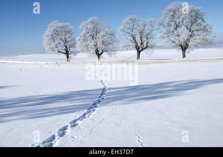 footsteps in the snow leading to a small road lined with trees covered with hoar frost - Stock Photo