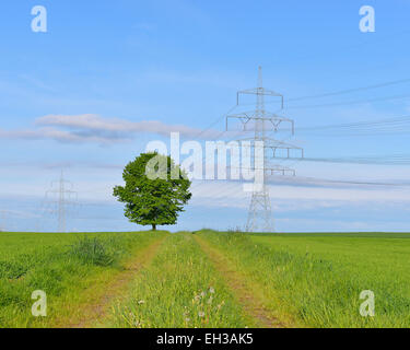 Tree in field next to pathway with hydro tower, Schwabhausen, Upper Bavaria, Bavaria, Germany