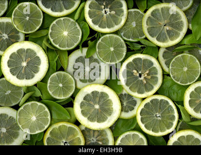 Colorful slices of lemons and limes - Stock Photo