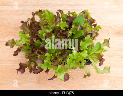 Baby salad leaves growing in a box from above on a pale wood windowsill, for a  'cut and come again' supply. - Stock Photo