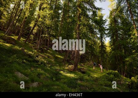 France, Alpes Maritimes, Parc National du Mercantour (Mercantour national park), Haute Vesubie, trek in the Gordolasque - Stock Photo
