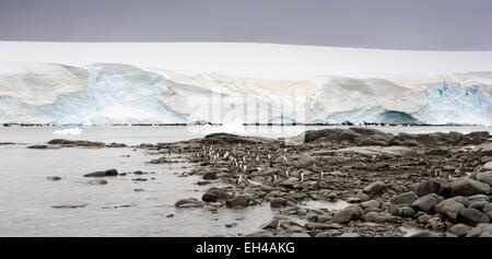 Antarctica, Goudier Island, Port Lockroy, gentoo penguins amongst rocky shoreline, panoramic - Stock Photo