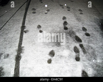Shoes footprints in the snow on the pavement at night - Stock Photo