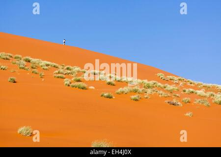 Namibia, Hardap region, Namib desert, Namib Naukluft national park, Namib Sand Sea listed as World Heritage by UNESCO, - Stock Photo