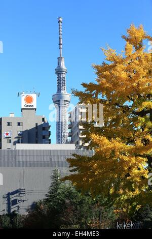 Japan, Honshu island, Tokyo, Taito, Asakusa district, Sumida district of Tokyo Skytree background - Stock Photo
