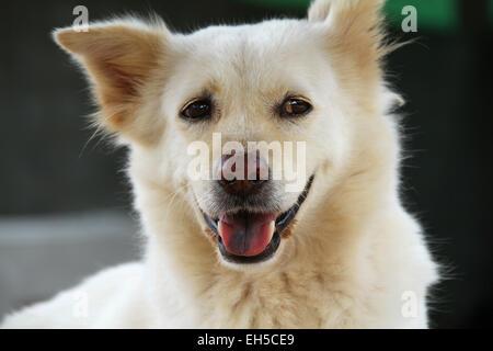 White dog - Stock Photo