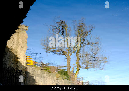 Reflection of a tree in a canal, Ladbroke Grove, London - Stock Photo